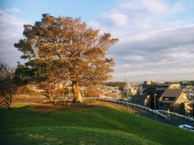 秋の清水ヶ丘公園
