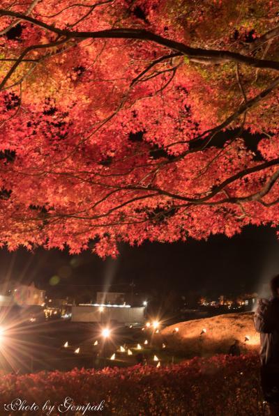 2018年山中湖ロッジ滞在記(6)11月編その1 晩秋の山中湖畔&紅葉真っ盛りの河口湖畔