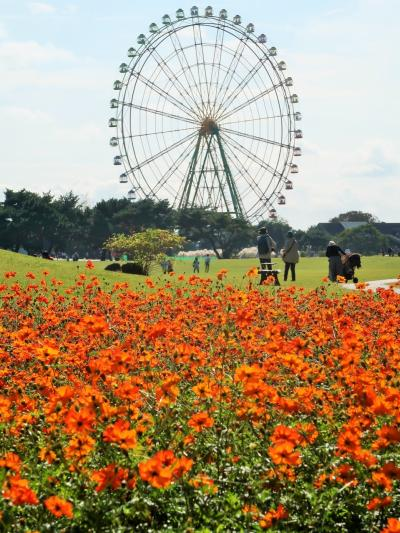 ひたち海浜公園-7 大草原フラワーガーデン   花ざかり ☆コスモス品種いろいろ・バラも