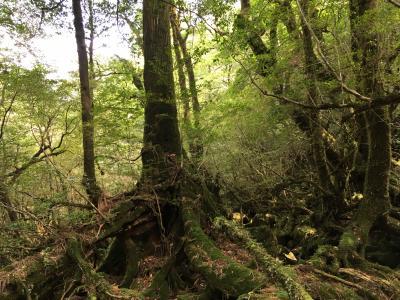 南九州の世界文化遺産・天草と自然遺産・屋久島を巡る=2018年10月②(もののけ姫の森? 白谷雲水峡)