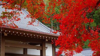 丹波篠山の紅葉狩り 洞光寺の紅葉。