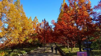 神戸市立森林植物園の紅葉 森林展示館の内部の見学。