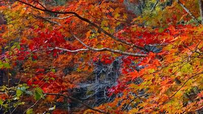 神戸市立森林植物園の紅葉 園内の紅葉 上巻。