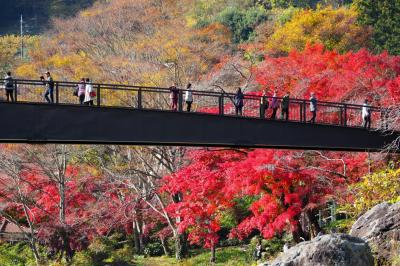 駅近の大自然 紅葉の御岳渓谷
