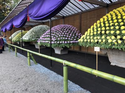 新宿御苑の「菊花壇展」は海外に誇れる素晴らしい日本の美、大温室も見どころあり
