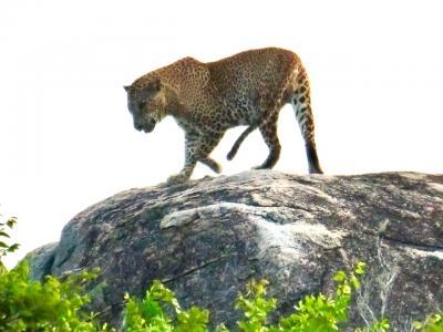 ヤーラ国立公園でAM半日サファリ