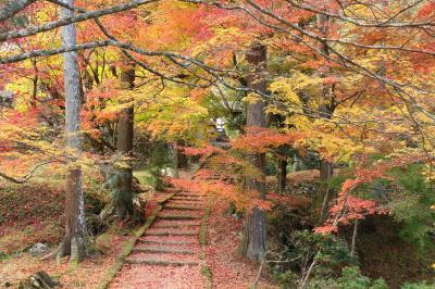 京都府の山寺 ひっそりと静かに燃える紅葉と見事な落ち葉を見に 行ってきました! (神蔵寺・龍澤寺・龍穏寺・西光寺)
