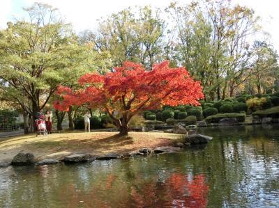 晩秋の大阪万博記念公園・自然文化園で、「紅葉三昧」の一日を過ごす。(2018)