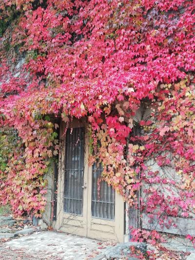 秋の小樽でグルメ&街歩き(2)「小樽運河・堺町通り」