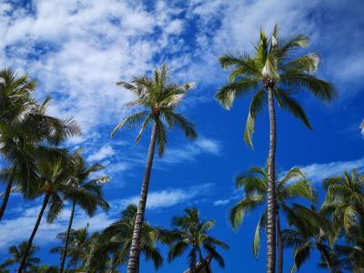 還暦夫婦 25年振りのハワイ旅行①
