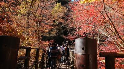 紅葉の花貫渓谷とちょっと寄り道(おてまき記念の森・十王パノラマ公園)