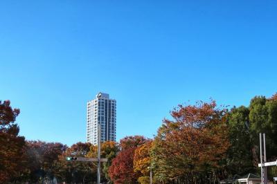 新宿で秋を感じる1日~高層階でランチ♪~