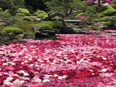 GW期間限定!池一面に浮かぶ大輪の牡丹の花 の巻