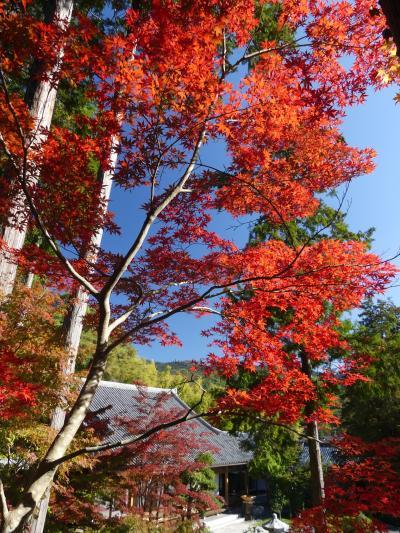 崇禅寺の紅葉_2018_3~4割の色付き具合ですが綺麗です。(群馬県・桐生市)