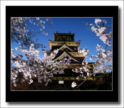 Solitary Journey[269]広島カープの語源となった鯉城のお堀に美しく咲く満開の桜<ライトアップされた広島城と桜>広島県広島市