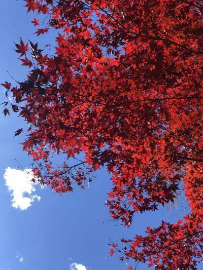 紅葉の季節 大谷~宇都宮ドライブ
