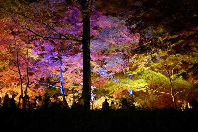 愛犬と一緒に紅葉見ナイト★国営武蔵丘陵森林公園★紅葉狩り&イルミネーション