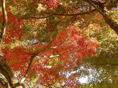 ふじみ野市西鶴ケ岡地区を散策しました