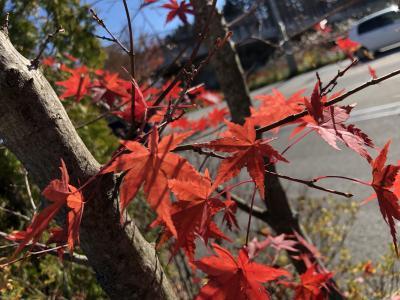残りの紅葉を求めて軽井沢