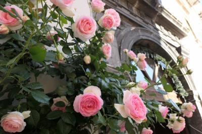 美しき南イタリア旅行♪ Vol.610(第21日)☆ペスココスタンツォ:「ホテル・レ・トッリ」美しいバラ♪