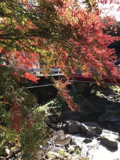 2019年11月 秋の紅葉もとめてドライブ(静岡と飯能)