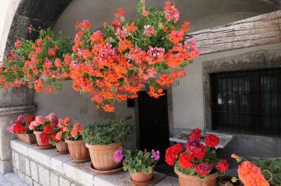 美しき南イタリア旅行♪ Vol.611(第21日)☆イタリア美しき村「ペスココスタンツォ」花がいっぱい♪