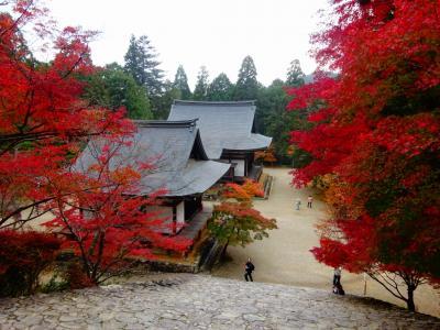 秋の嵐山・嵯峨野・高尾、紅葉を求めて