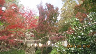 琵琶湖周遊古刹巡礼と若狭の国の旅