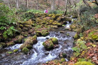 奥大山の木谷沢渓流は必見の価値あり!