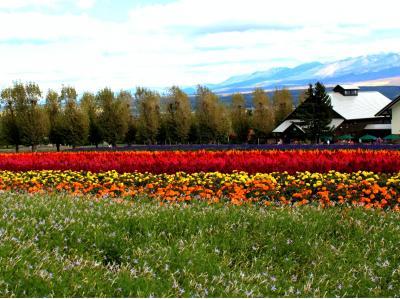 彩りの畑と十勝岳☆富良野のファーム富田で一息ついたら新千歳空港で最後のグルメ「ザンギ」と「豚丼」を味わって♪♪