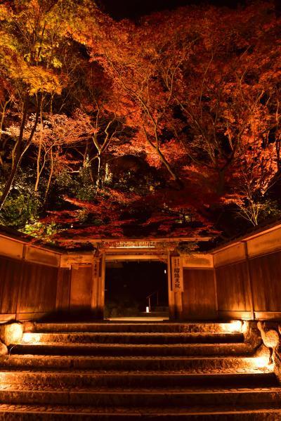 瑠璃光院の夜間特別拝観・八瀬もみじ小径ライトアップに行きました. (*^^*)