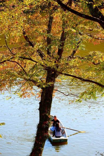 秋の奈良で紅葉をめでる その5 興福寺&奈良公園散策