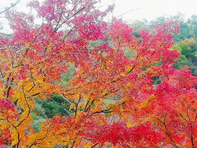 豪渓と井山宝福寺の紅葉を見に