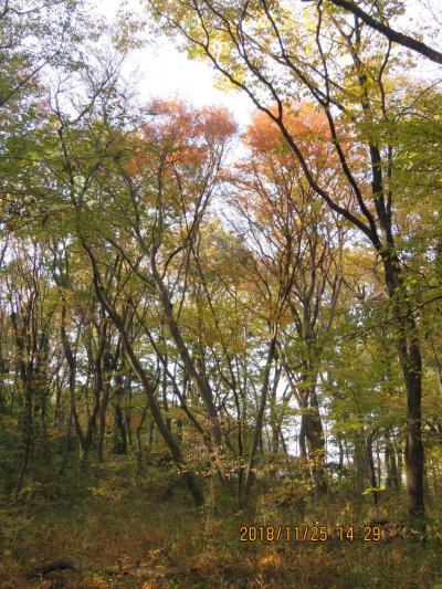 秋らしく紅葉始めた森のさんぽ道を散策しました。