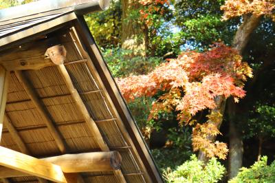 【鎌倉散歩】旧山本条太郎別荘一般公開…最終日にすべり込み