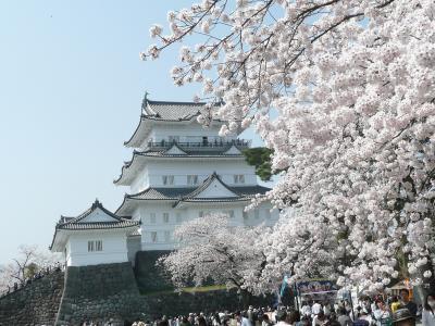 桜花爛漫の小田原城探訪