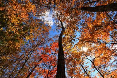 大菩薩~牛ノ寝通り~大マテイ山~小菅の湯 紅葉真っ盛り秋の日帰り登山