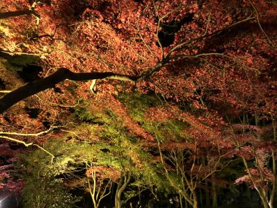 平成最後の紅葉を満喫する旅 Part1