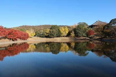 2018/11/24奈良公園紅葉狩り