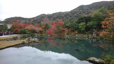 今年も京都に紅葉狩りをしに行きました。(嵐山・洛西編)