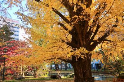 11月初旬の北海道ひとり旅(4)~晴れて嬉しい大通公園と赤レンガぶらり、そして帰路もバニラエア