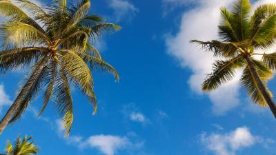 はじめてのハワイ wifi体験