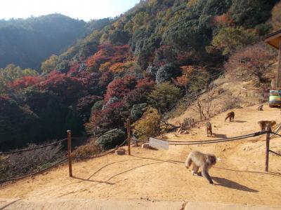 京都 嵐山の紅葉 「嵐山モンキーパークいわたやま」
