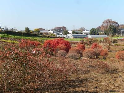 所沢市南永井付近の秋の風景