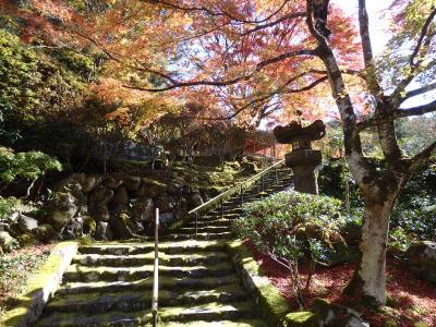 秋の洛北~昼と夜の紅葉をじっくり味わい旅~