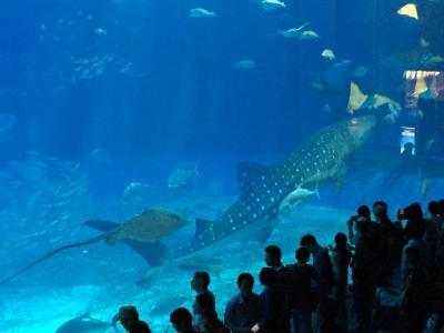 今帰仁城、美ら海水族館、そして備瀬フクギ並木を歩く/食いしん坊の秋ぶらり旅「沖縄編」