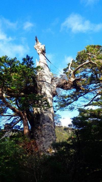 チャータークルーズで行く屋久島と五島列島(05) 屋久島ツアーに参加 紀元杉の見学。