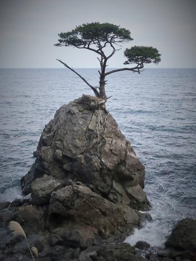佐渡島14 内海府海岸 両津⇔大野亀 バスドライブ ☆岩礁の一本松/健気に立って