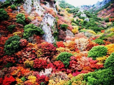 <香川・秋色島旅.3>うぉぉ~カラフルだ!紅葉の「寒霞渓」高松・美術館のような温泉