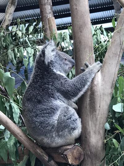 初めてのオーストラリア
